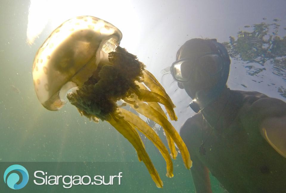 sugba lagoon jellyfish