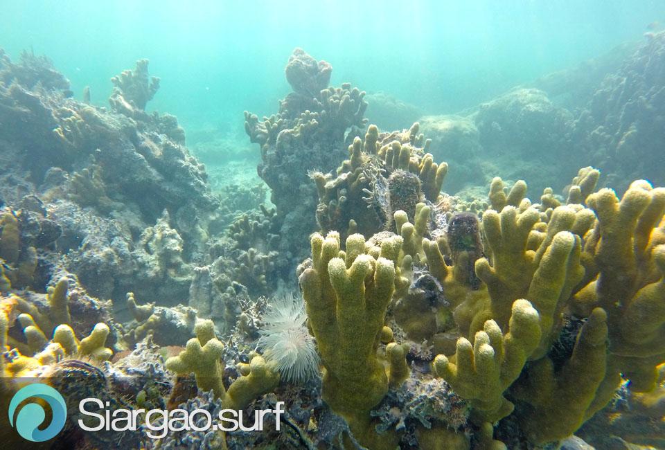 sugba lagoon snorkeling